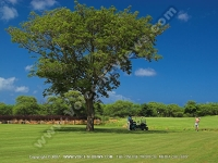tamarina_golf_spa_and_beach_club_mauritius_golfer_swing.jpg