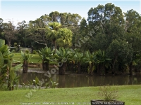 botanical_garden_curepipe_lake_view_mauritius.jpg