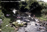mauritius_old_time_photo_woman_washing_clothes_in_the_river.jpg