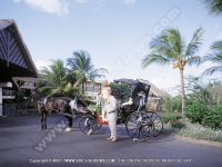 wedding_at_maritim_hotel_mauritius.jpg